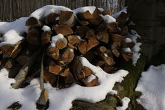 Firewood in winterly forest Royalty Free Stock Photo