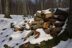 Firewood in winterly forest Stock Photo