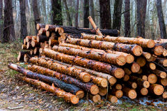 Firewoods在森林里 库存照片