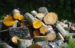 Firewoods Imagen de archivo libre de regalías