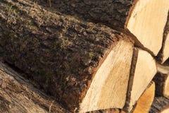 Firewoods Fotografie Stock Libere da Diritti