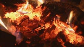 Firewoods de queimadura em brasas na chaminé filme