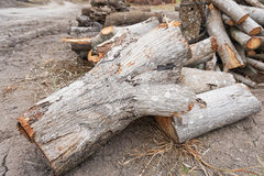 Firewoods Royalty Free Stock Photos