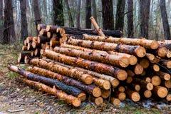Firewoods na floresta Foto de Stock