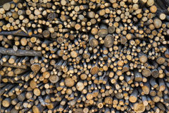 Firewoods stacked Stock Image