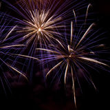 Firework. Royalty Free Stock Images