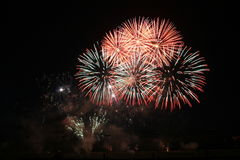 Firework. A beautiful firework in a warm summer night Royalty Free Stock Images
