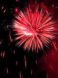 Firework. Salute at date of independence (Latvia Royalty Free Stock Photo