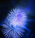 Firework. Great firework on night sky - celebration of an event Stock Image