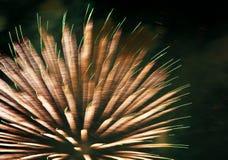 firework Fotografía de archivo libre de regalías