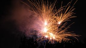 Firework behind trees silhouette. Golden stock images