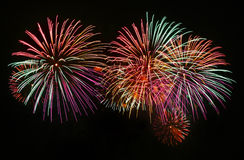 Firework. Colorful firework background at night royalty free stock photos