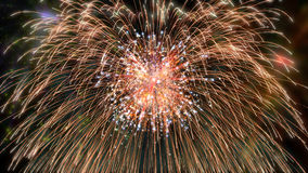 Firework colorful Stock Images