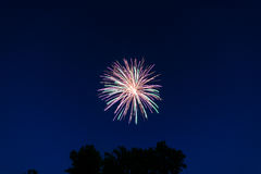 Firework. Exploding on the fourth of July Royalty Free Stock Photography