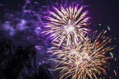 Firework fireworks celebration gold red purple blasts tree Royalty Free Stock Photography