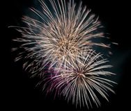 Firework at night Stock Image