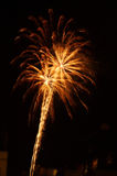 Fireworks. Double fireworks like palm tree Royalty Free Stock Photography