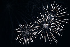 Fireworks. At night Royalty Free Stock Photo