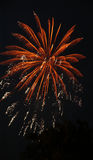 Fireworks. New year colorful fireworks display Royalty Free Stock Photos