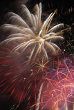 Fireworks. Colorful Explosion of fireworks in the night sky stock image