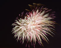 Fireworks. Royalty Free Stock Image