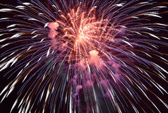 Fireworks. Amazing fireworks in the sky in the night Stock Photos