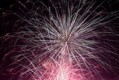 Fireworks. Beautiful fireworks on the black sky Royalty Free Stock Photo
