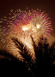 Fireworks behind a palm tree. Fireworks behind the silhouette of a palm tree Royalty Free Stock Image