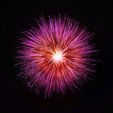Fireworks on the black sky. Background Royalty Free Stock Images