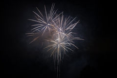Fireworks on a black sky. Celebration fireworks on a black sky Royalty Free Stock Photo
