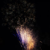 Fireworks in the black sky Royalty Free Stock Images