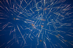 Fireworks on blue sky Royalty Free Stock Photography