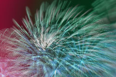Fireworks from Bright multicolored glowing spheres and flickering stars. Beautiful modern background for all bright Stock Photography