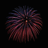 Fireworks. Colorful fireworks in the night sky Royalty Free Stock Image