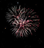 Fireworks. A delicate bursts of palm-like fireworks in the night sky royalty free stock images