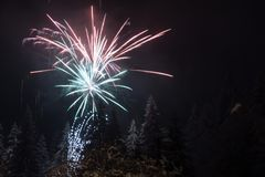 Fireworks on fir trees covered in snow