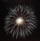 Fireworks flower. On dark background Stock Photography