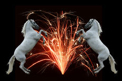 Fireworks and horses Royalty Free Stock Images