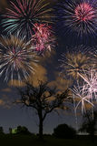 Fireworks at night. Colorful Fireworks in a dark night during a fireworks competition in germany Stock Images