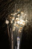 Fireworks over the Ohio River royalty free stock photography