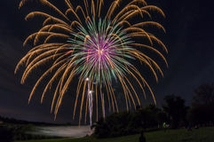 Fireworks over tree line Royalty Free Stock Image