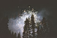 Fireworks over tree tops Stock Images