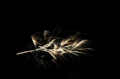 Fireworks palm Royalty Free Stock Photos