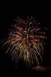 Fireworks. Pyrotechnical show with light and colors on black sky Royalty Free Stock Photos