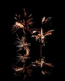Fireworks reflection Stock Image
