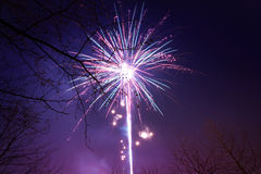 Fireworks with silouette of trees Stock Photography