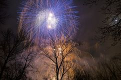 Fireworks in the sky above the trees Royalty Free Stock Photography