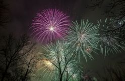 Fireworks in the sky above the trees Royalty Free Stock Image