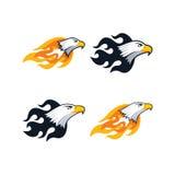 Firey eagle. Bold firey eagle bird template theme  art illustration Royalty Free Stock Photo