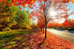 Firey fall colors Stock Images